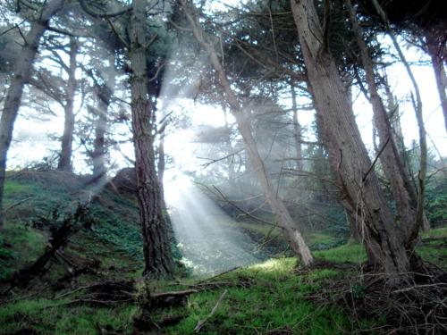intuitive-nature-walks-san-francisco